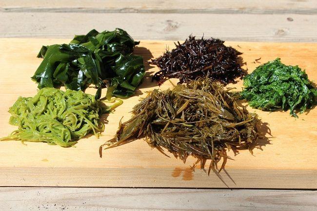 Fucoidan có nhiều trong tảo biển Nhật Bản