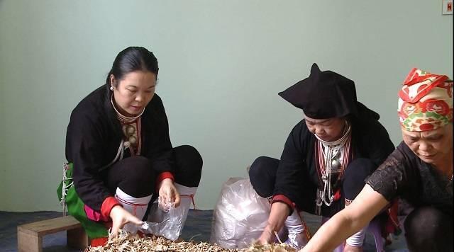Lương Y Triệu Thị Lan - Người giữ bài thuốc gia truyền trị xương khớp hiệu quả